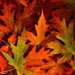 Poem leaves